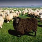 My Uncle Julie—Every Family Has a Black Sheep. Can They Change with Age?